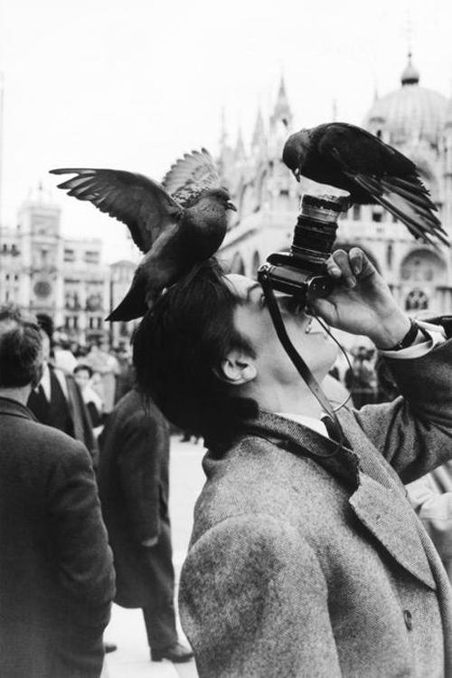 birds_camera